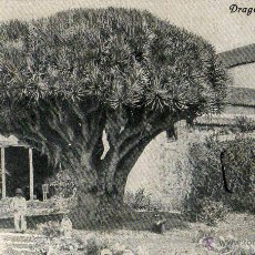Postales: POSTAL ANTIGUA TENERIFE -LA LAGUNA -DRAGO. Lote 44765113