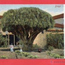 Postales: LA LAGUNA. DRAGO. Lote 48919124