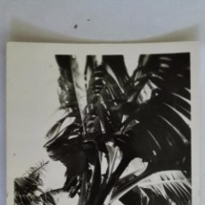 Postales: SANTA CRUZ DE TENERIFE - PLATANERA, ED. ARRIBAS. Lote 50108546