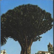 Postales: ICOD DE LOS VINOS - GRAGO MILENARIO. Lote 50666511