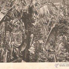 Postales: LAS PALMAS - PLATANERAS J. PERESTRELLO CIRCULADA. Lote 51164236