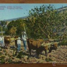 Postales: GRAN CANARIA. LAS PALMAS. ARANDO CON BUEYES. . Lote 51251145