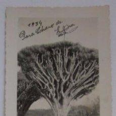 Postales: ANTIGUA POSTAL FOTOGRAFICA DE LA ISLA DE LA PALMA - AÑO 1934. Lote 52729682