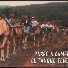 Postales: PASEO A CAMELLO - EL TANQUE TENERIFE.. Lote 54609198