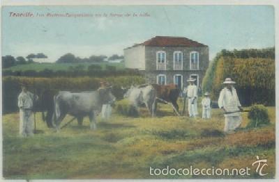 POSTAL ANTIGUA DE CANARIAS. TENERIFE. LOS RODEOS. CAMPESINOS EN LA TRILLA P-CAN-643 (Postales - España - Canarias Antigua (hasta 1939))