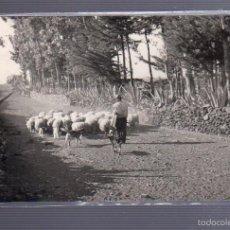 Postales: TARJETA POSTAL DE ISLA DEL HIERRO - ESTAMPA PASTORIL. FOTO RAMON AYALA. Lote 56038041