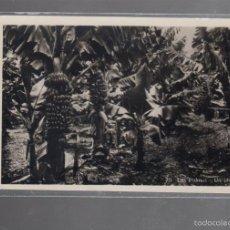 Postales: TARJETA POSTAL DE LAS PALMAS - UN PLATANAR. BAZAR ALEMAN. Lote 56352574