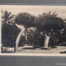 Postales: TARJETA POSTAL DE LAS PALMAS - DRAGOS EN EL PARQUE MUNICIPAL. 53. BAZAR ALEMAN. Lote 56352676