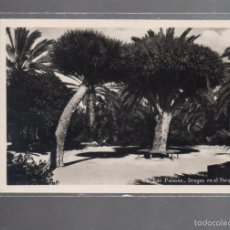 Postales: TARJETA POSTAL DE LAS PALMAS - DRAGOS EN EL PARQUE MUNICIPAL. 53. BAZAR ALEMAN. Lote 56352891