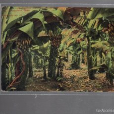 Postales: TARJETA POSTAL DE LAS PALMAS - PLANTACION DE BANANAS. Nº 16. PERESTRELLO. Lote 56376876