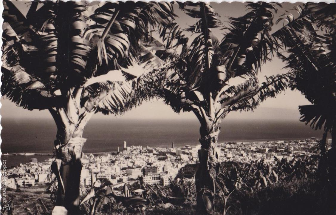 P- 5110. POSTAL SANTA CRUZ DE TENERIFE. VISTA PARCIAL ENTRE PALTANERAS. ED. LUJO. (Postales - España - Canarias Moderna (desde 1940))