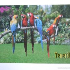 Postales: POSTAL CANARIAS - TENERIFE - LOROS - SIN CIRCULAR. Lote 56555012