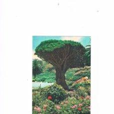 Postales: POSTAL ANTIGUA TENERIFE SIN CIRCULAR ICOD DRAGO. Lote 58665498