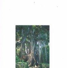 Postales: POSTAL ANTIGUA TENERIFE SIN CIRCULAR PUERTO DE LA CRUZ JARDIN BOTANICO. Lote 58665545