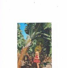 Postales: POSTAL ANTIGUA LAS PALMAS DE GRAN CANARIA SIN CIRCULAR RACIMO DE PLATANOS. Lote 58665850