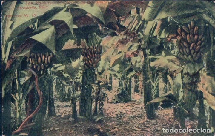 POSTAL LAS PALMAS.- PLANTACION DE BANANAS. J. PERESTRELLO Nº16 (Postales - España - Canarias Antigua (hasta 1939))