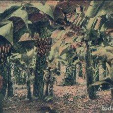 Postales: POSTAL LAS PALMAS.- PLANTACION DE BANANAS. J. PERESTRELLO Nº16. Lote 61378255