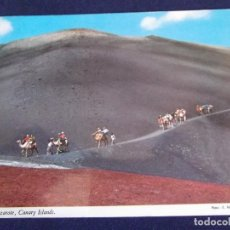 Postales: ISLAS CANARIAS-LANZAROTE-V1-CARAVANA DE CAMELLOS. Lote 62073640