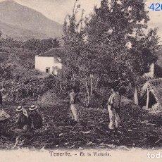 Postales: TENERIFE. EN LA VICTORIA – NORBREGAS ENGLISH BAZAR NO. 7 . Lote 64874751