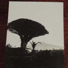 Postales: FOTO POSTAL TENERIFE, ICOD, EL DRAGO Y EL TEIDE, N. 67, FOTO JG, NO CIRCULADA.. Lote 73567855