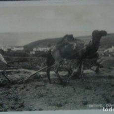 Postales: TENERIFE. 'CAMPESINO ARANDO' POSTAL FOTOGRAFICA SIN CIRCULAR. FOTO CENTRAL. Lote 74163475