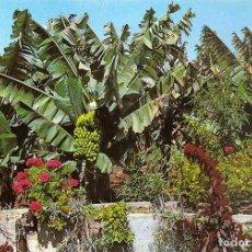 Postales: ISLAS CANARIAS - FLORES Y PLATANERAS (AÑOS 60). Lote 74815231
