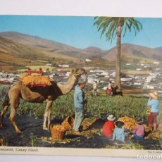 Postales: POSTAL LANZAROTE - VALLE DE YAIZA - SIN CIRCULAR. Lote 93063545