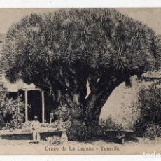 Postales: TENERIFE. DRAGO DE LA LAGUNA.. Lote 96200103