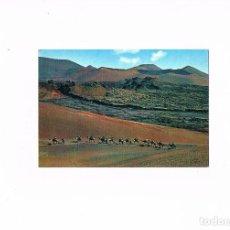 Postales: POSTAL ANTIGUA CANARIAS SIN CIRCULAR LANZAROTE CARAVANA DE CAMELLOS. Lote 98065951