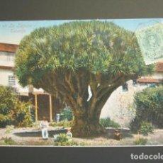 Postales: POSTAL TENERIFE. DRAGO DE LA LAGUNA. CIRCULADA. . Lote 99357315