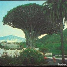 Postales: 1013 - ICOD - TENERIFE .- DRAGO MILENARIO ; AL FONDO EL TEIDE. Lote 103303391