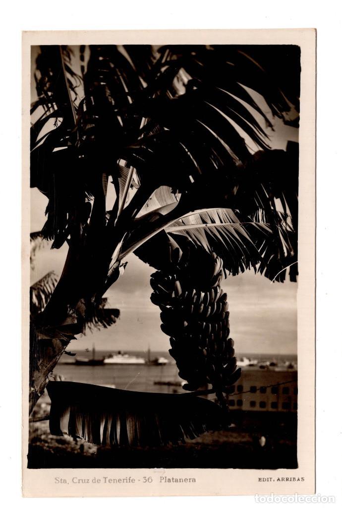 CANARIAS. SANTA CRUZ DE TENERIFE, PLATANERA. ED. ARRIBA (Postales - España - Canarias Antigua (hasta 1939))