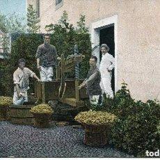 Postales: TENERIFE- ICOD-PRENSANDO UVA PARA VINO- SIN DIVIDIR -1905 -MUY RARA. Lote 103868499