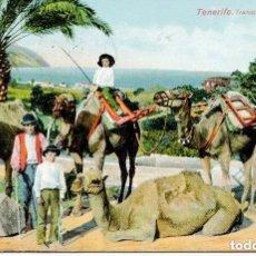 Postales: TENERIFE-- TRANSPORTE EN CAMELLOS- AÑO 1911- NOBREGA'S. Lote 103869327