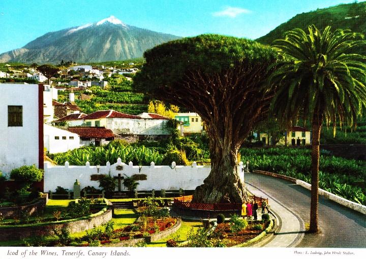 ICOD DE LOS VINOS - TENERIF (JOHN HINDE 2 CT 23) SIN CIRCULAR / P-350 (Postales - España - Canarias Moderna (desde 1940))