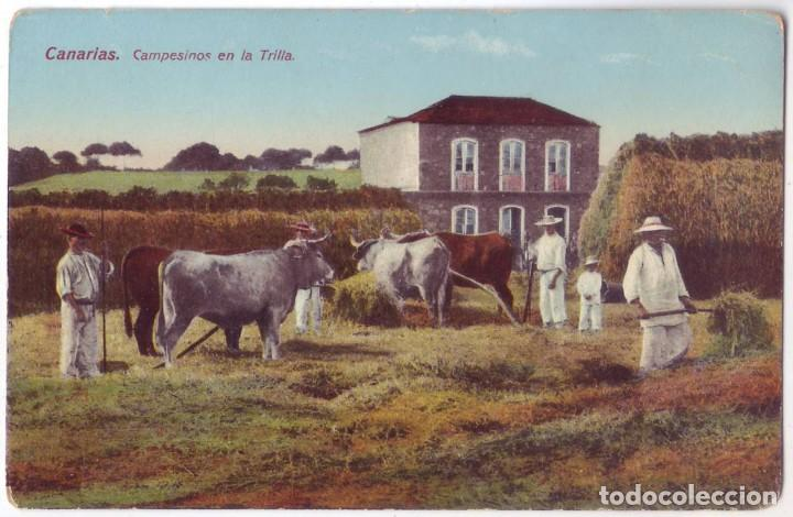 ISLAS CANARIAS: CAMPESINOS EN LA TRILLA. RODRIGUEZ BROS. NO CIRCULADA (AÑOS 10) (Postales - España - Canarias Antigua (hasta 1939))