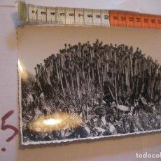 Postales: ANTIGUA FOTO ORIGINAL CARDONES AÑOS 40 - FOTO A.BENITEZ - ENVIO INCLUIDO A ESPAÑA. Lote 107731503