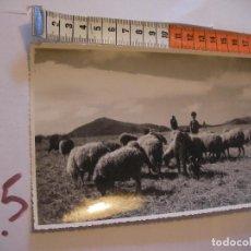 Postales: ANTIGUA FOTO ORIGINAL PADRE E HIJO CON REBAÑO OVE AÑOS 40 - FOTO A.BENITEZ - ENVIO INCLUIDO A ESPAÑA. Lote 107731815