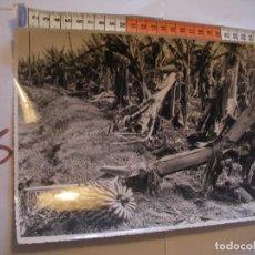 Postales: ANTIGUA FOTO ORIGINAL PLATANERAS AÑOS 40 - FOTO A.BENITEZ - ENVIO INCLUIDO A ESPAÑA. Lote 107731831