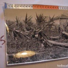 Postales: ANTIGUA FOTO ORIGINAL PLATANERAS AÑOS 40 - FOTO A.BENITEZ - ENVIO INCLUIDO A ESPAÑA. Lote 107731847