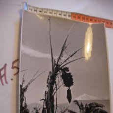 Postales: ANTIGUA FOTO ORIGINAL PLATANERAS AÑOS 40 - FOTO A.BENITEZ - ENVIO INCLUIDO A ESPAÑA. Lote 107731859
