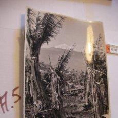 Postales: ANTIGUA FOTO ORIGINAL PLATANERAS AÑOS 40 - FOTO A.BENITEZ - ENVIO INCLUIDO A ESPAÑA. Lote 107731879