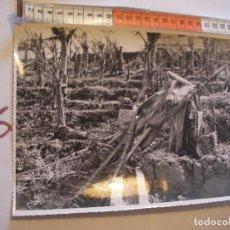Postales: ANTIGUA FOTO ORIGINAL PLATANERAS AÑOS 40 - FOTO A.BENITEZ - ENVIO INCLUIDO A ESPAÑA. Lote 107731915