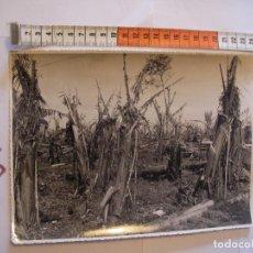 Postales: ANTIGUA FOTO ORIGINAL PLATANERAS AÑOS 40 - FOTO A.BENITEZ - ENVIO INCLUIDO A ESPAÑA. Lote 107731931