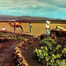 Postales: LANZAROTE (LAS PALMAS) -ESCENAS CAMPESTRES- 1960 (EDICIONES ARRIBAS Nº 2001) SIN CIRCULAR / P-1885. Lote 110210623