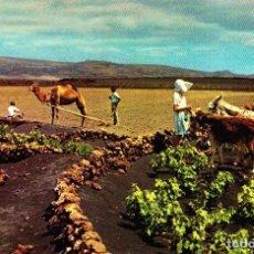 Postales: LANZAROTE - LAS PALMAS -ESCENAS CAMPESTRES- 1960 (EDICIONES ARRIBAS Nº 2001) SIN CIRCULAR / P-2829. Lote 115917555