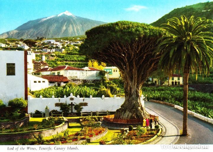 ICOD DE LOS VINOS - TENERIFE - (JOHN HINDE Nº 2 CT) SIN CIRCULAR / P-3177 (Postales - España - Canarias Moderna (desde 1940))