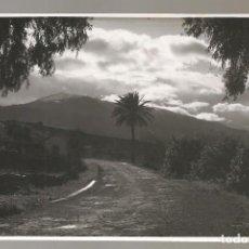 Postales: FOTOGRAFÍA ORIGINAL CANARIAS , AL DORSO PONE: LOS LLANOS DE AXIDADES 1954 (LA PALMA) .... Lote 125423559