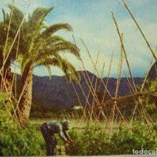 Postales: POSTAL. VALLE DE AGAETE. TOMATEROS. GRAN CANARIA. ED. FOTOCOLOR VALMAN. SIN CIRCULAR. . Lote 128736103