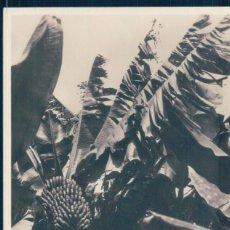 Postales: POSTAL TENERIFE - PLATANERAS - FOTOGRAFICA. Lote 129510755